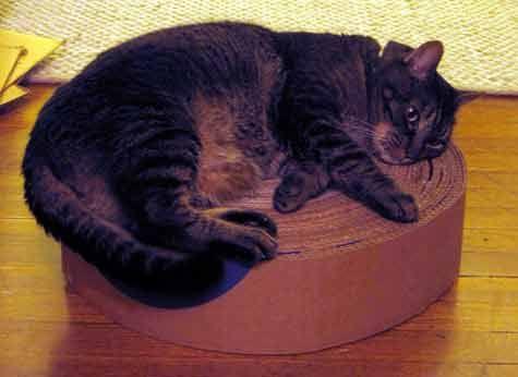 Si estás cansado de que tu gato arañe tus muebles y no quieres gastar dinero, puedes seguir estos pasos para fabricarle un rascadora tu mascota. Al mismo tiempo, podrás darle un uso a las cajas...