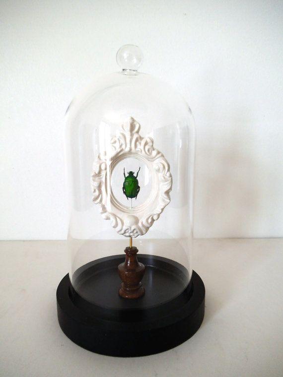 Globe Cabinet de Curiosité Insecte par LeCoinDesCuriosites sur Etsy