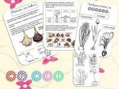 PLANTONS DES BULBES | la classe de corinne | Bloglovin