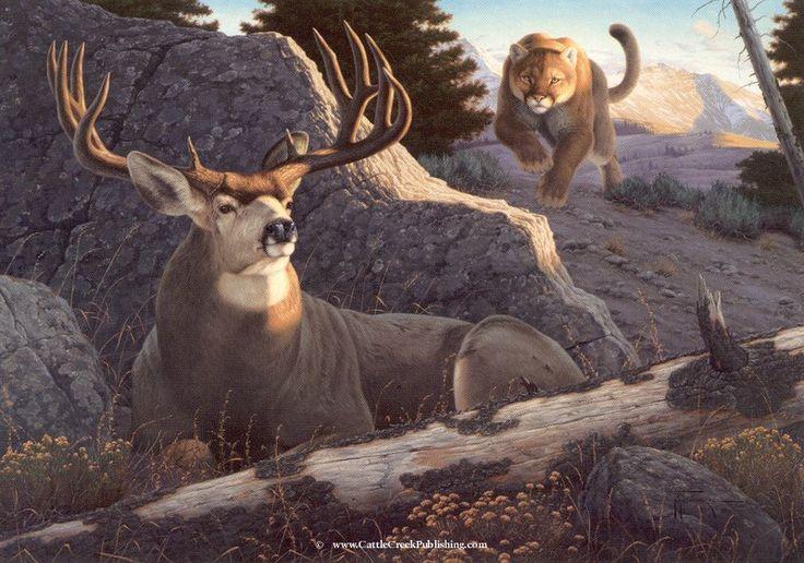 Mountain Lion Attack Buck Deer Ambush By Tom Mansanarez