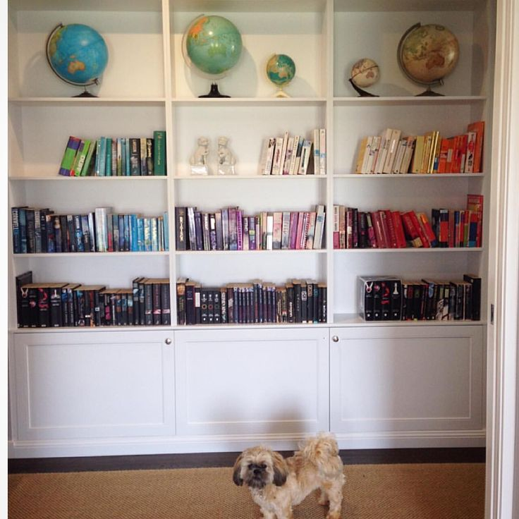 Custom built in cabinetry. Colour coded bookcase. Globe collection. Shih tzu.