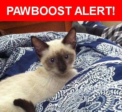 Please spread the word! Lilo was last seen in Lake Alfred, FL 33850.    Nearest Address: Near E Orange St & S Seminole Ave