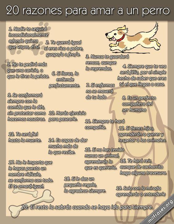 ¡Buenos y caninos días! 20 razones para amar a un perro y para asistir a DESPEGA.: