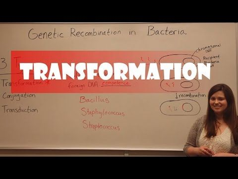 Bacterial Transformation - YouTube