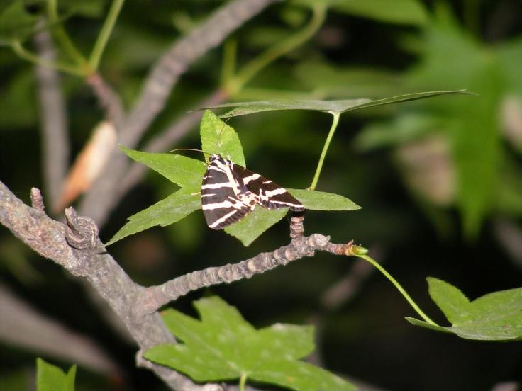 Valley of Butterflies. Rhodes, Greece.