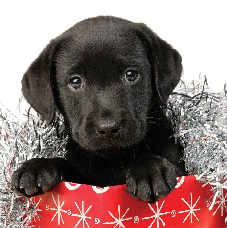 We are now taking orders for this years Christmas Cards. Please follow the link to our website for... dogsforthedisabled.org