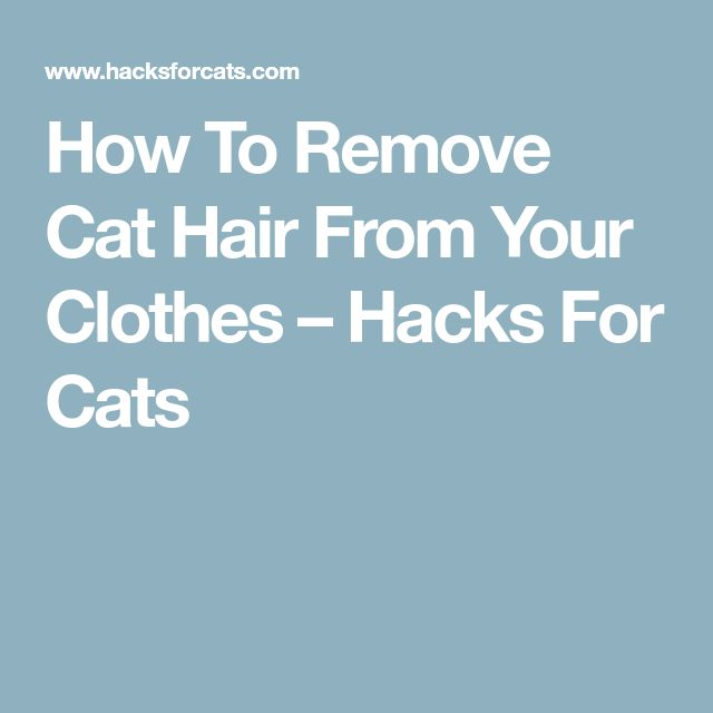 How To Remove Cat Hair From Your Clothes – Hacks For Cats