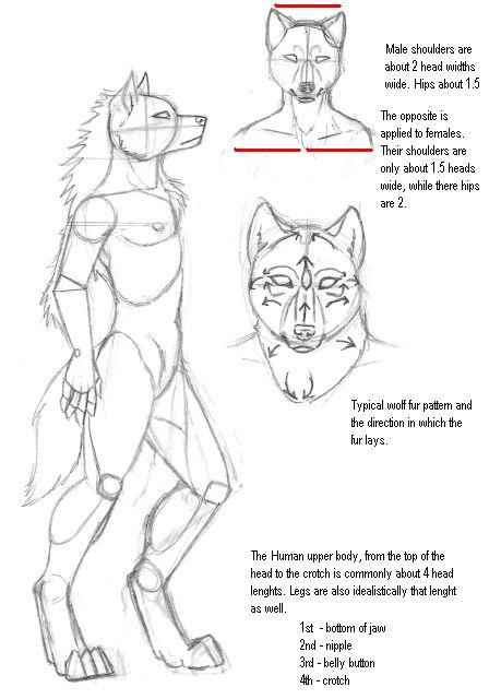 Male wolf furry tutorial