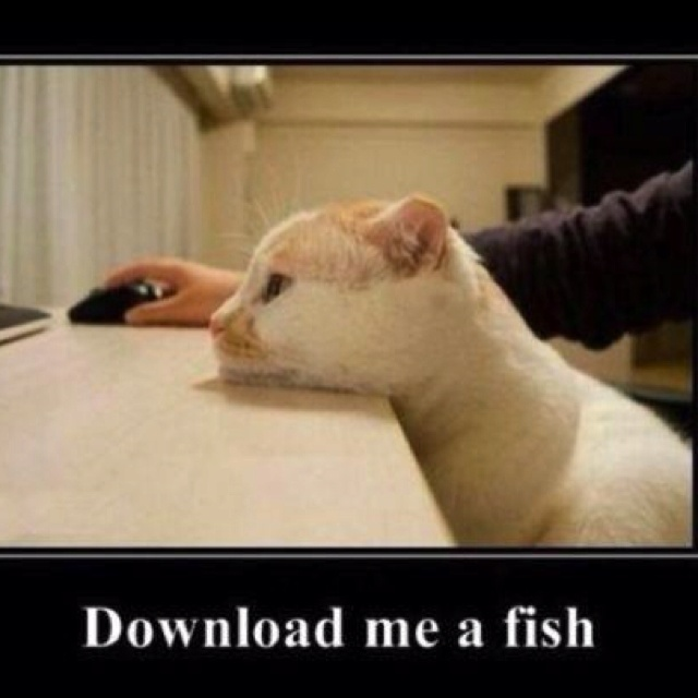Download me a fish: Computers, Funny Animal Pictures, Funny Pictures, Fish, Funny Stuff, Cat Meme, Faces Off, Demotivational Poster, Baby Cat