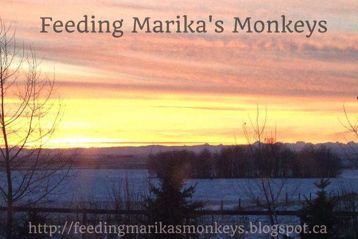 Feeding Marika's monkeys