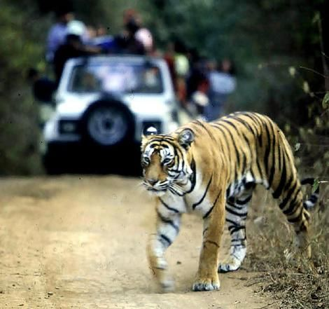 Jim Corbett National Park, India Would love to see a tiger in the wild.