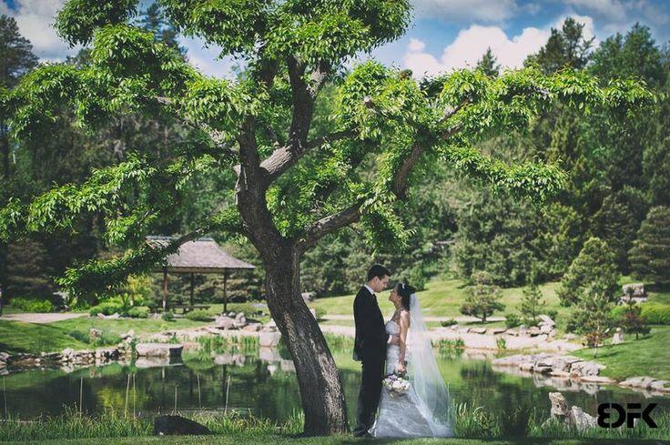 Another photo from Alexandrina  Igor Wedding. - Devonian Botanic Garden
