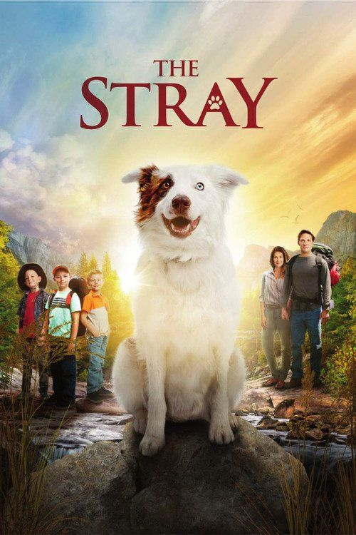 Watch->> The Stray 2017 Full - Movie Online | Download The Stray Full Movie free HD | stream The Stray HD Online Movie Free | Download free English The Stray 2017 Movie #movies #film #tvshow