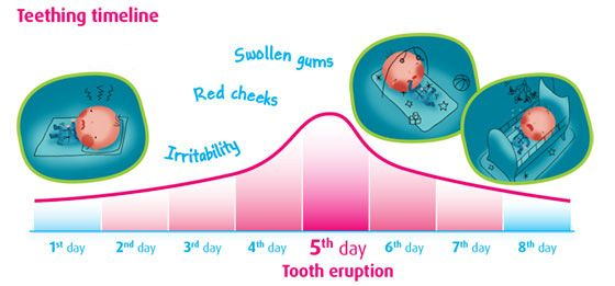 The Teething Timeline  Camilia Teething Medicine | Safe and Natural Teething Relief for Infants