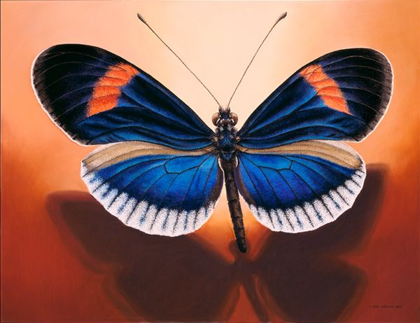 a smaal colourful butterfly