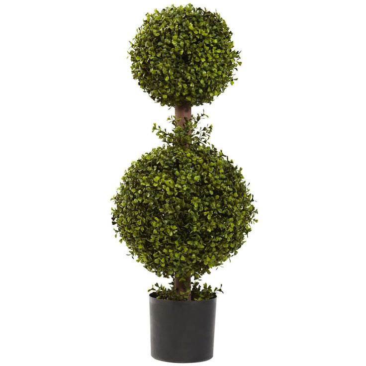 Man has been taking trimmers and clippers to Boxwoods for years. That's because this lovely shrub is one of nature's most hardy specimens, and does very well when shaped. This classic 'double ball' Topiary captures the elegance of curving foliage.