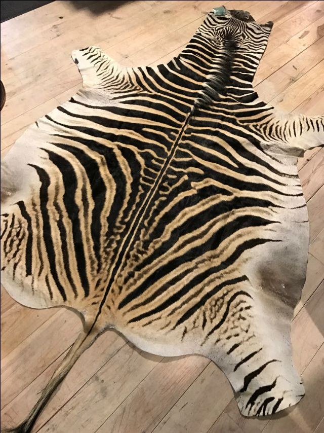 Freshly Tanned Zebra Skins The Skins Are Of The Highest Quality Animal Hides Cowhide Zebra Skin Cow Skin De Jachtkamer Animal Hide Animal Skin Zebra