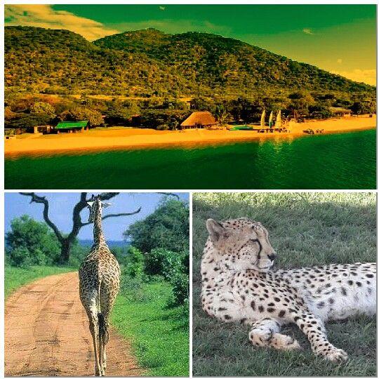 Beach and Safaris