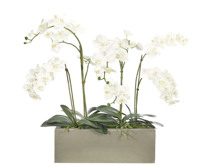 Orchid (WF514): Orchid Phalaenopsis, White, Window Box Concrete Finish, 40wx28dx33h