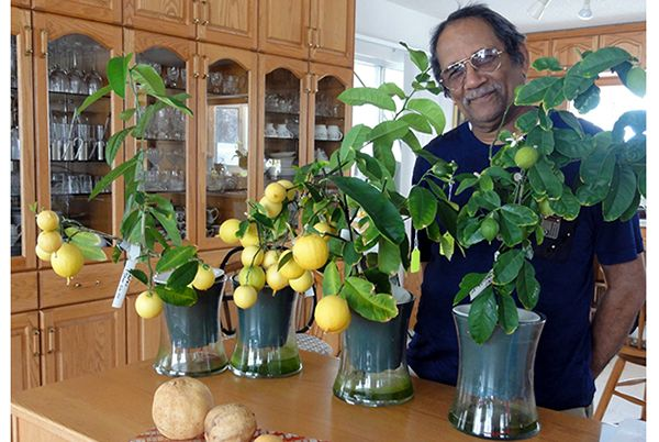 Want to learn how to grow lemons and orchids? | Columbia Valley, Invermere