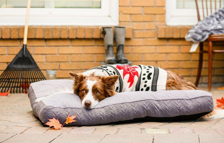Bailey & Bella Maple Leaf Sweater