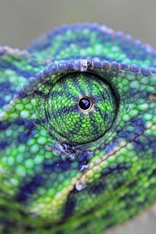 chameleon by raj dhage on 500px