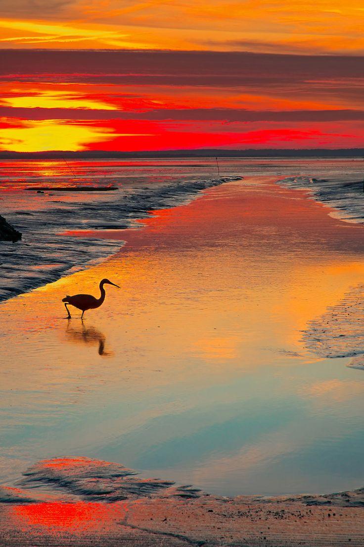 Bird at sunset, Port d'Audenge - France.