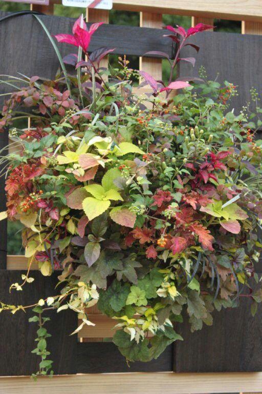 Hanging flower for Hibiya Gardening Show  Autumn 2012