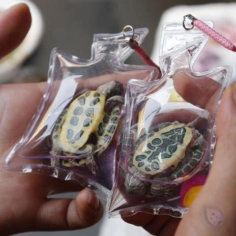 #CHINA: VENDEN PEQUEÑOS #ANIMALES VIVOS COMO #ACCESORIOS. En varios mercados de #Beijing, China, se venden pequeñas bolsas de plástico que contienen en su interior pequeños animales vivos. Cada bolsa es llenada de un oxígeno y un líquido nutritivo que puede mantener los animales alimentados durante dos meses. Estas populares bolsas son usadas como #llaveros o accesorios que muestran animales como peces de colores, salamandras y tortugas, entre otros.