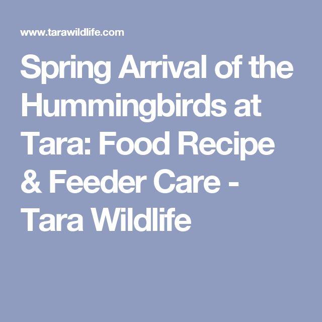 Spring Arrival of the Hummingbirds at Tara: Food Recipe & Feeder Care - Tara Wildlife