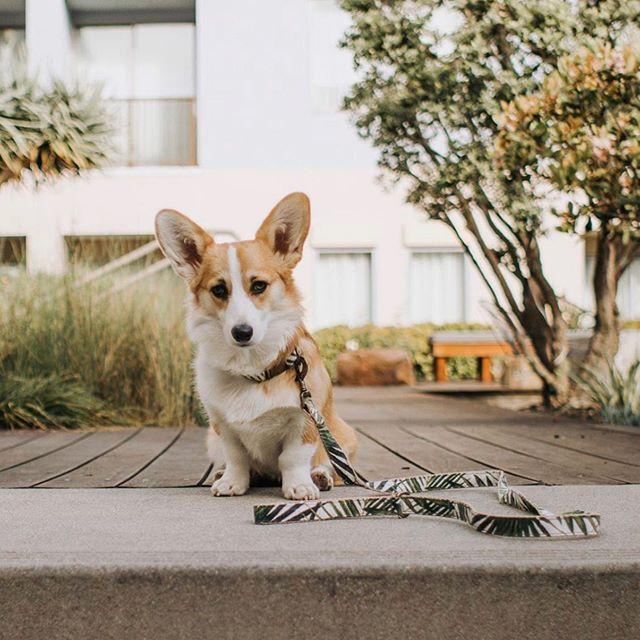 Missing This Cutie Ryleeboobear In 2020 Dog Solution Urban Dog Dogs