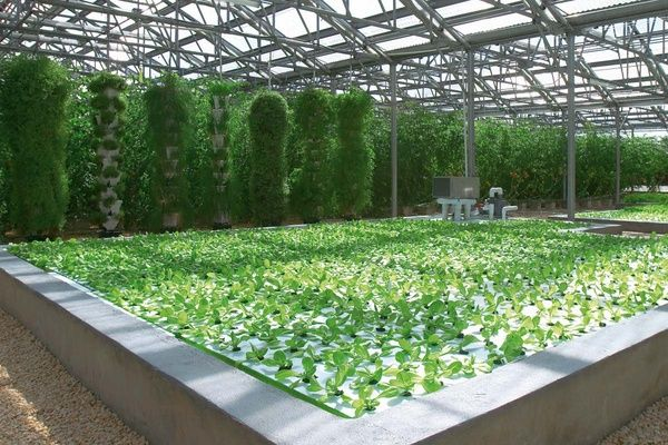 Energy efficient, easy to control, customized and pre wired aquaponics greenhouse are not easy to design. aquaponics greenhouse should have a south knee