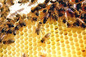 Skin Benefits of Beeswax