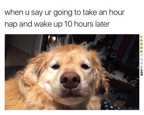 That is EXACTLY the face, too. Lol |Humor||Funny pictures||Dog memes||Sleep humor||Naps||My life||Relatable posts||Animal funny|