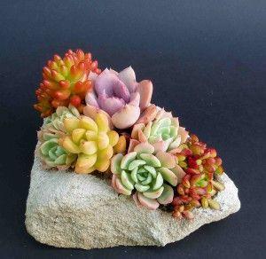 succulents in a rock