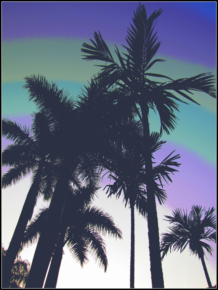 South Florida - palm trees in the morning