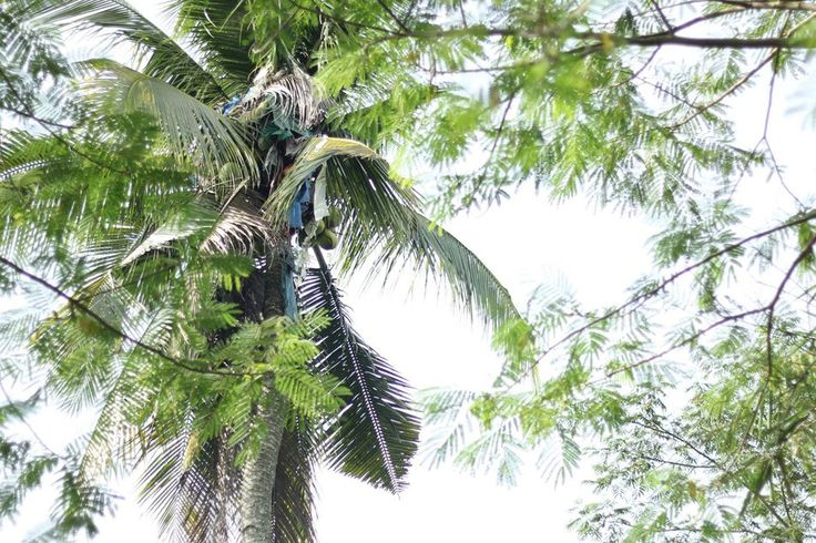 awesome Man Forcibly Removed From 60-Ft Palm Tree Where He's Lived For 3 Years