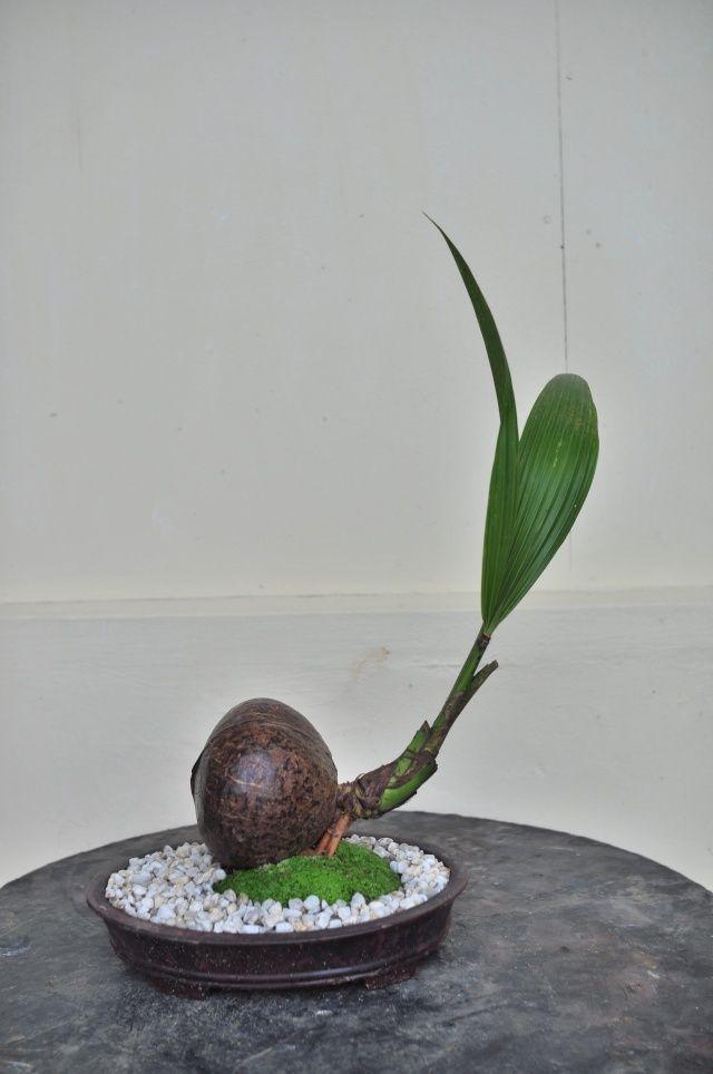 les 1014 meilleures images du tableau bonsa sur pinterest am nagement de jardin bonsa s et. Black Bedroom Furniture Sets. Home Design Ideas