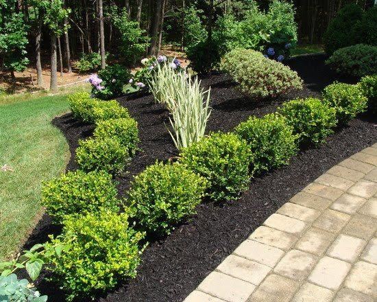 Best 25 winter gem boxwood ideas on pinterest green for Green plants for landscaping