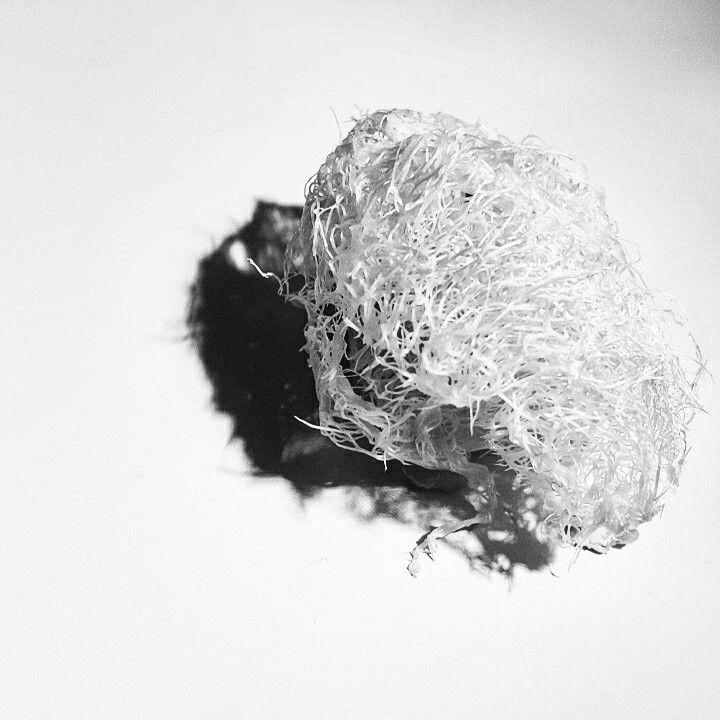 Sponge fot.M.Górska