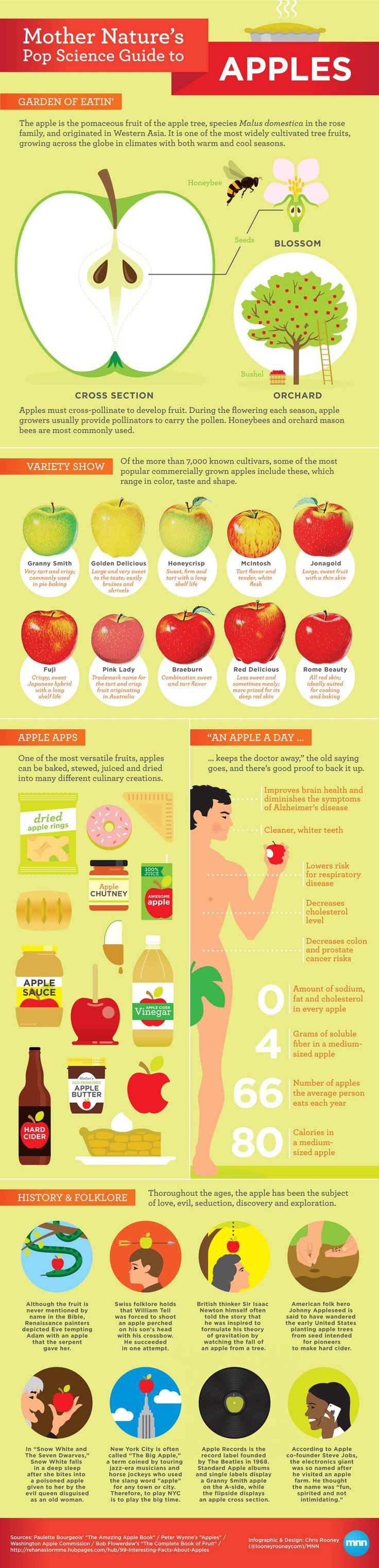 Mother Nature's Pop Science Guide to Apples [Infographic] | MNN - Mother Nature Network