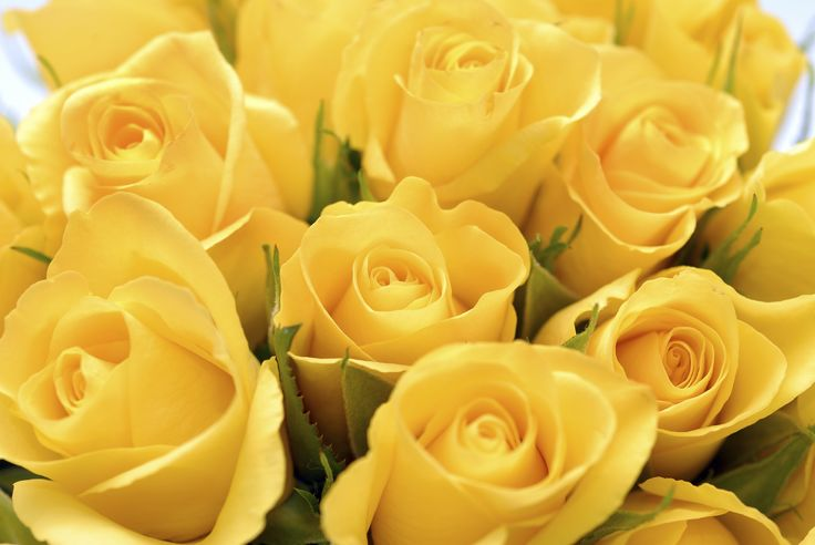 Yellow roses you can post on facebook yellow roses - Yellow rose images hd ...