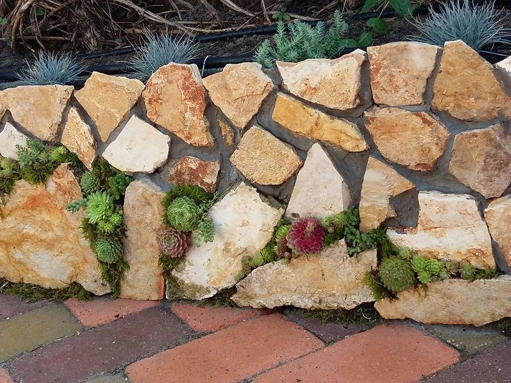 Kővi rózsa a kövekben. :)
