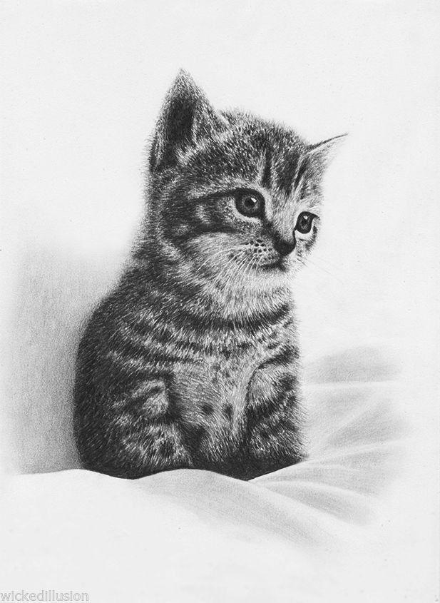 Pet Portrait Kitten Original Graphite Pencil Drawing Cute Adorable