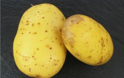 Come conservare le patate: tutti i trucchi - NanoPress Donna