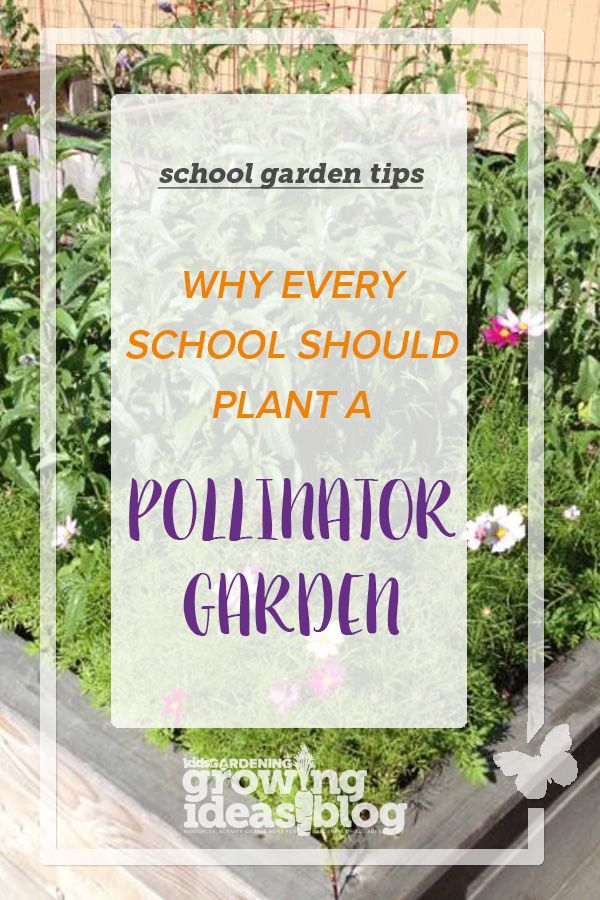 c32718916092acbb56f23bf730fb3640 - Why Gardening Should Be Taught In Schools