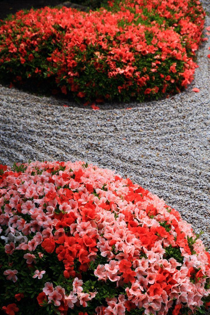 方丈庭園南庭 一休寺 サツキ 華やか 京都