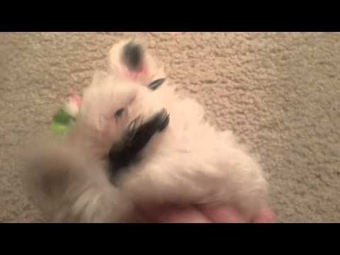 Pringles the Real Original Mustache Puppy Dog - YouTube