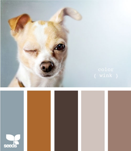Design Seed's Doggy Inspired Color Palettes. Brilliant! Miles has some gorgeous tones I should be drawing inspiration from. ;) created by @jessica colaluca
