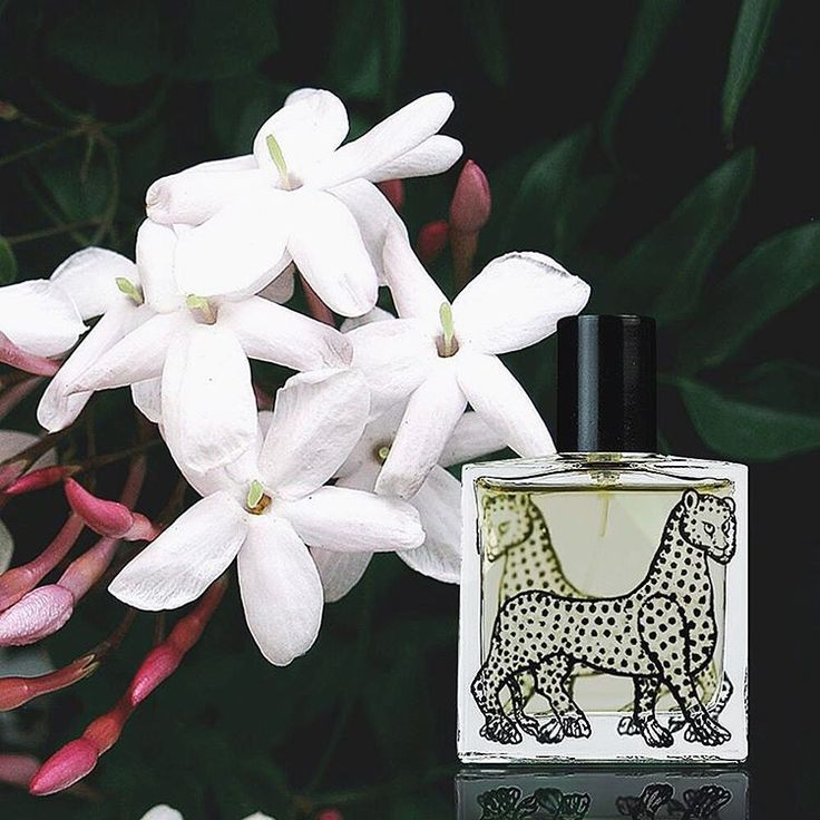 Gelsomino, Sicilian #jasmine #eaudeparfum made from the white flowers of the noblest and most fragrant jasmine, picked in the early morning when just open #scent #fragrance #summer #sicily